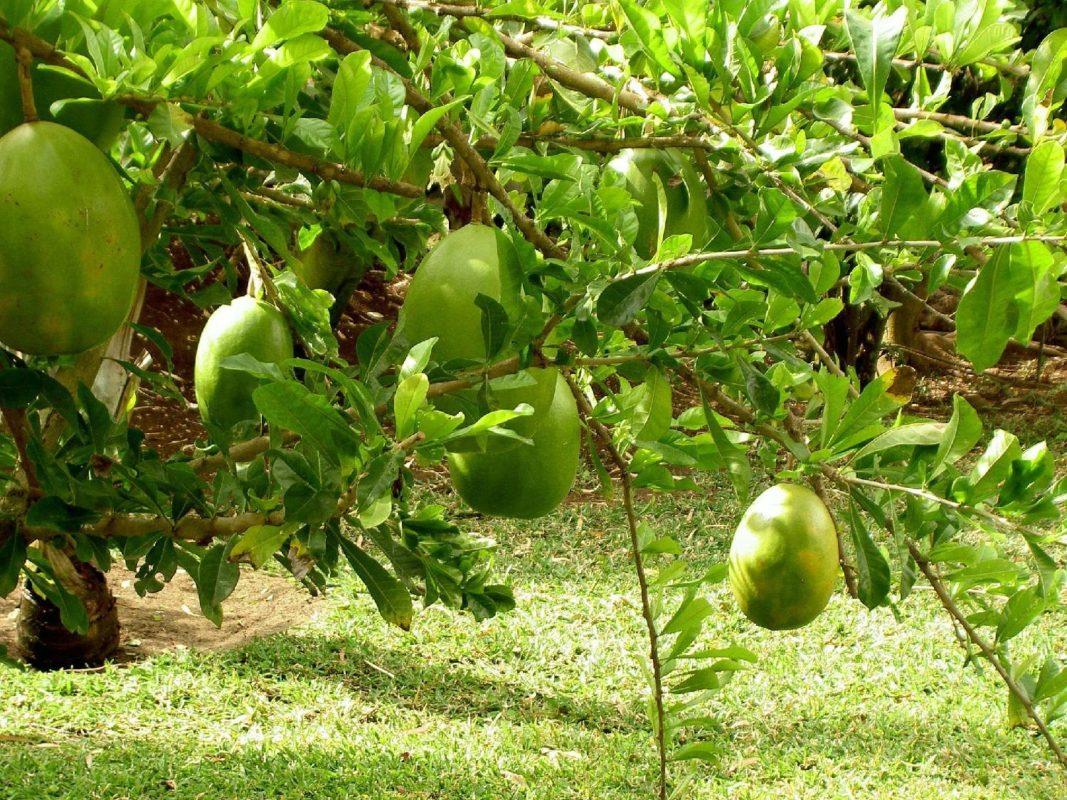 Jardin D Eden Carte De La Reunion