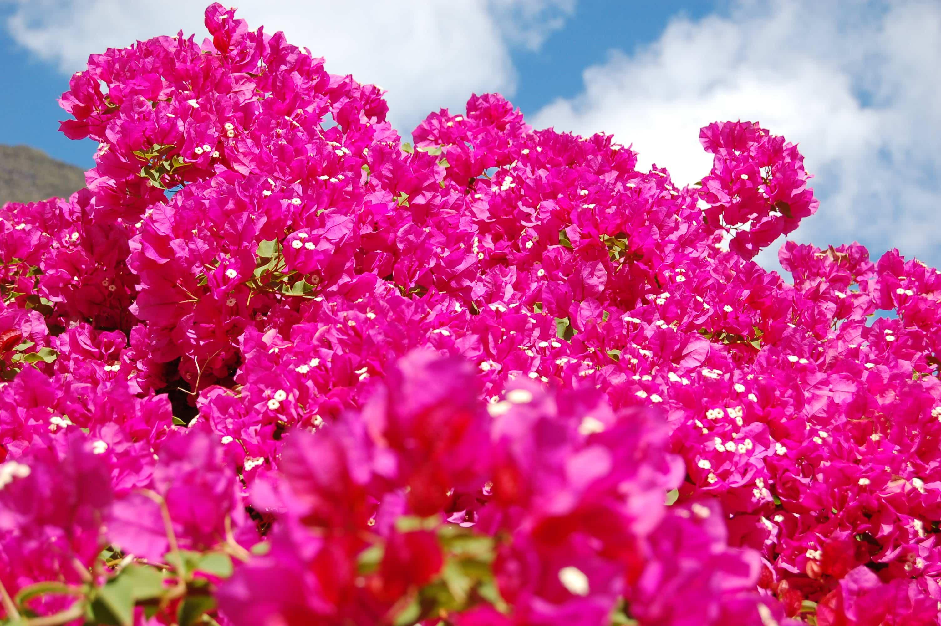 Favori La flore de La Réunion | Carte de La Réunion NJ89